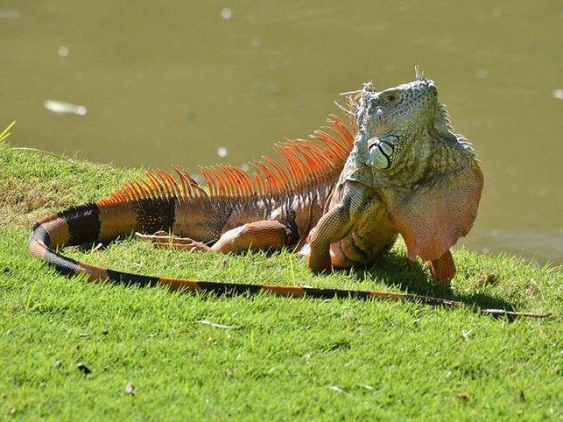 cac-cua-hang-ban-iguana-baby-rong-nam-my-gia-re-tphcm