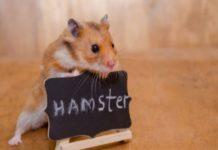 cac-cua-hang-ban-hamster-gia-re-o-nha-trang-uy-tin-cho-ban-lua-chon